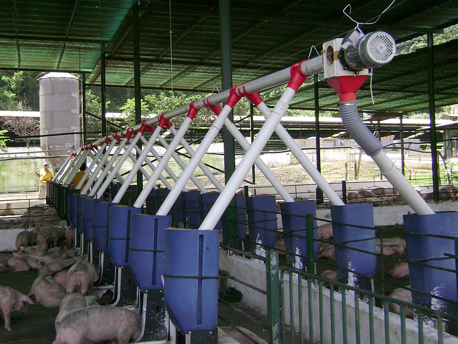 FEEDING SYSTEM FATTENING FARMS